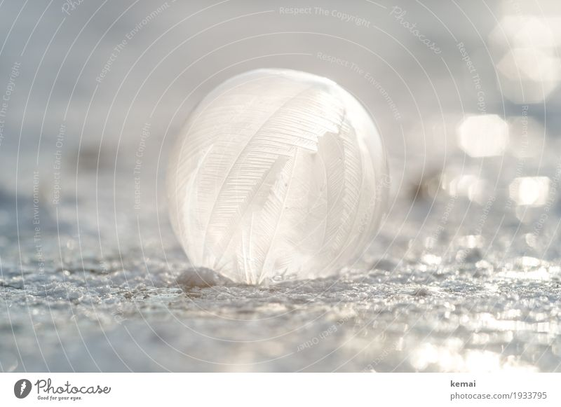as light as a feather Leisure and hobbies Playing Winter Nature Elements Water Sunlight Beautiful weather Ice Frost Snow Lie Fresh Glittering Round White