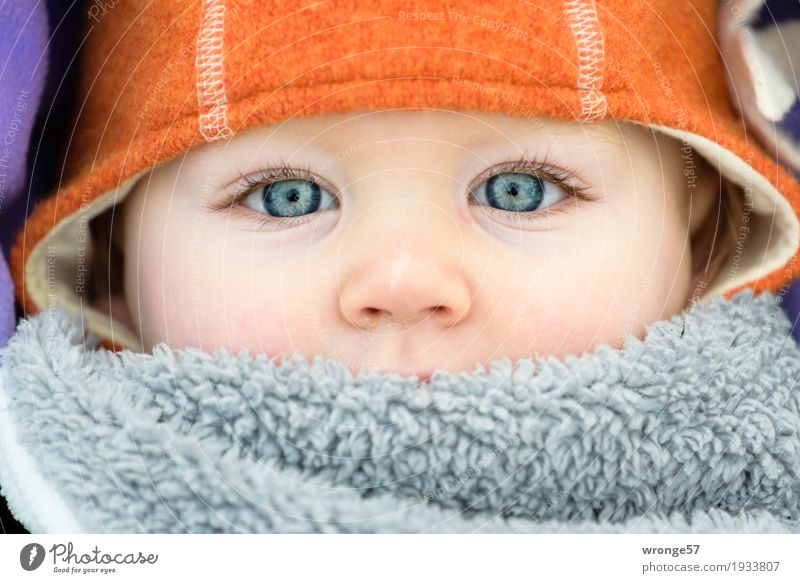 winter child Human being Child Toddler Girl Face 1 1 - 3 years Looking Blue Gray Violet Orange Detail of face Eyes Nose Children's eyes Winter Cold Cap Close-up