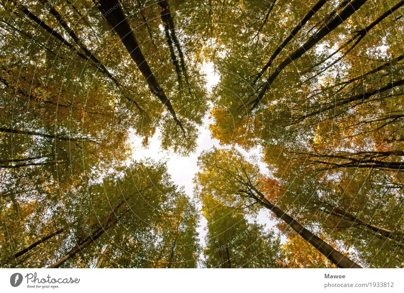 Trees and interstices Calm Meditation Hiking Environment Nature Landscape Plant Sky Summer Forest Tall Natural Green Exterior shot Worm's-eye view Upward