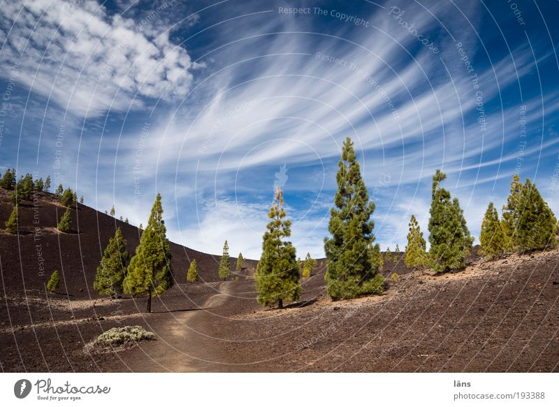 Nature Sky Tree Plant Mountain Lanes & trails Landscape Environment Earth Exceptional Elements Beautiful weather Canaries Volcano Pine Coniferous trees