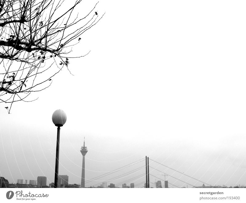 tidiness. Environment Nature Plant Cloudless sky Horizon Winter Tree Duesseldorf Downtown Outskirts Skyline Bridge Architecture Tourist Attraction Landmark