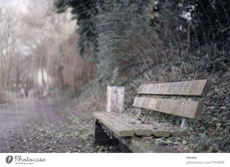 Leaf Cold Autumn Gray Lanes & trails Park Graffiti Empty Bench Simple Art Trash container Copy Space left Park bench