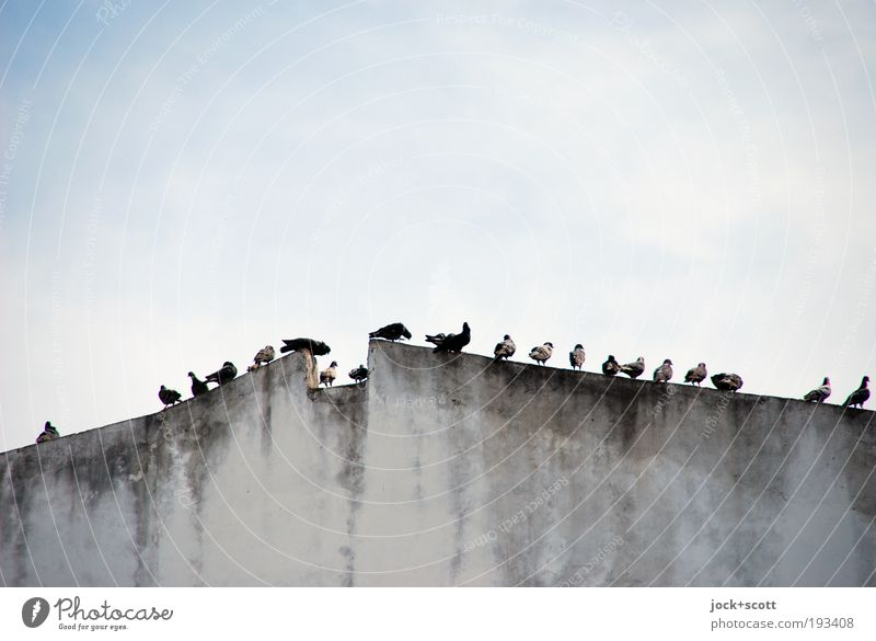 Sky City Relaxation Calm Wall (building) Natural Building Wall (barrier) Gray Above Bird Together Dirty Gloomy Sit Wait