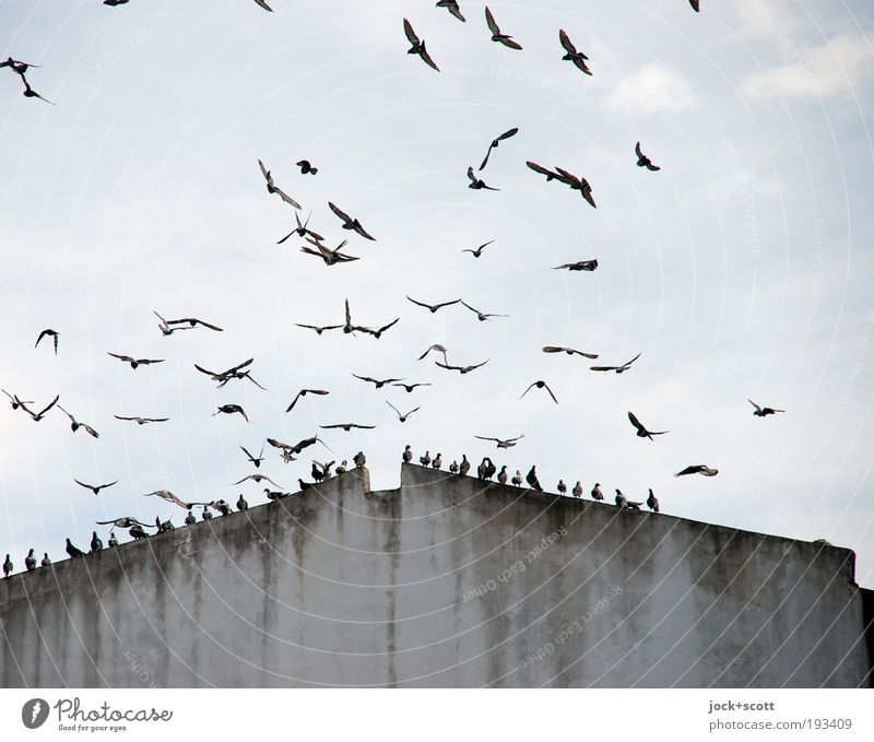 Sky Clouds Environment Movement Building Gray Above Flying Bird Together Gloomy Sit Climate Esthetic Group of animals Roof