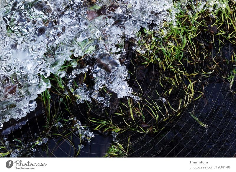 Wet cold (1/2). Environment Nature Elements Water Winter Ice Frost Plant Grass Brook Freeze Dark Cold Gray Green Black Structures and shapes Smoothness