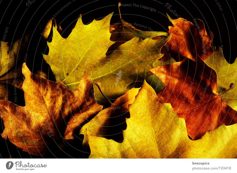 Nature Green Plant Flower Leaf Yellow Autumn Brown Gold