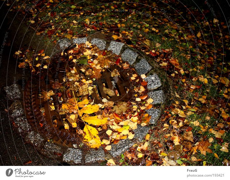 Autumn on the street Leaf Deserted Street Gully Round Under Brown Multicoloured Yellow Colour Transience Change Colour photo Exterior shot Night Flash photo