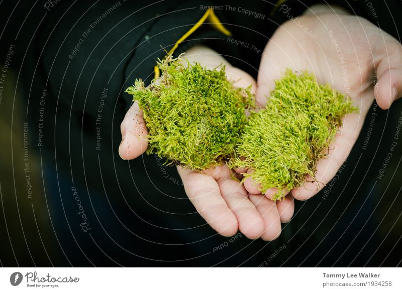 Love in your hands Herbs and spices Skin Island Decoration Child Man Adults Friendship Hand Fingers Nature Plant Grass Moss Leaf Meadow Forest Fur coat Carrying