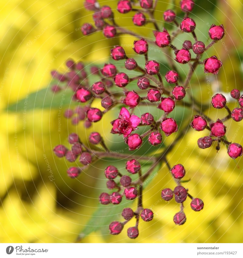 Nature Plant Green Summer Tree Flower Leaf Yellow Blossom Spring Natural Happy Bright Pink Park Illuminate