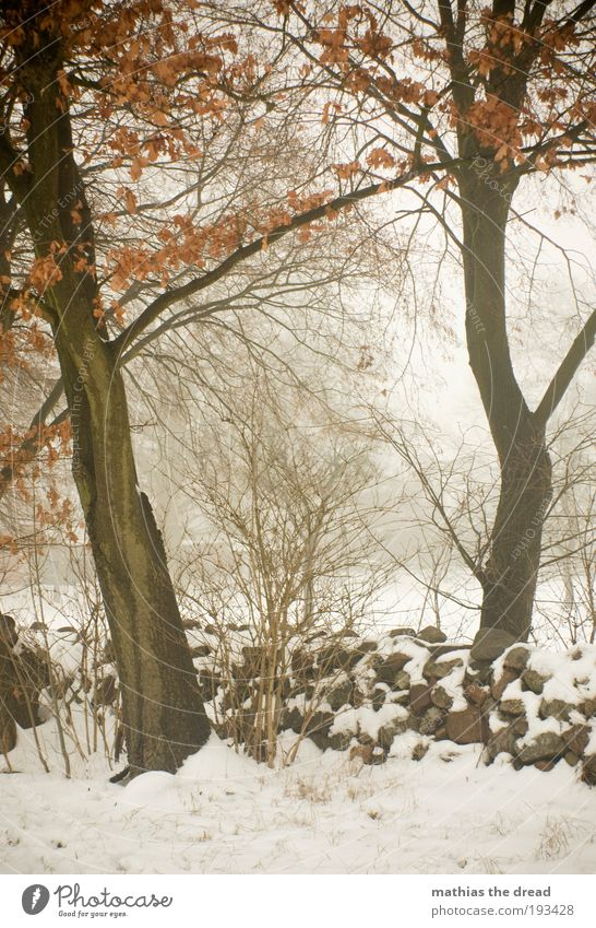 Nature Beautiful Tree Plant Winter Leaf Forest Dark Cold Snow Meadow Landscape Ice Field Fog Environment