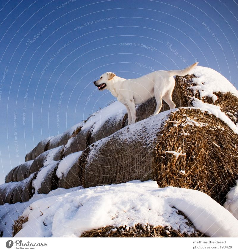 Nature White Winter Animal Cold Snow Playing Dog Ice Field Wait Elegant Environment Frost Vantage point Stand