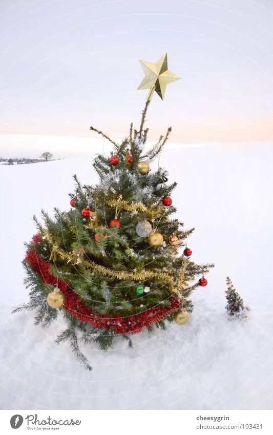 Large Christmas tree and Small Christmas tree Joy Winter Snow Winter vacation Decoration Friendship Sky Stars Tree White field leaning 2 Sunset Tinsel caring