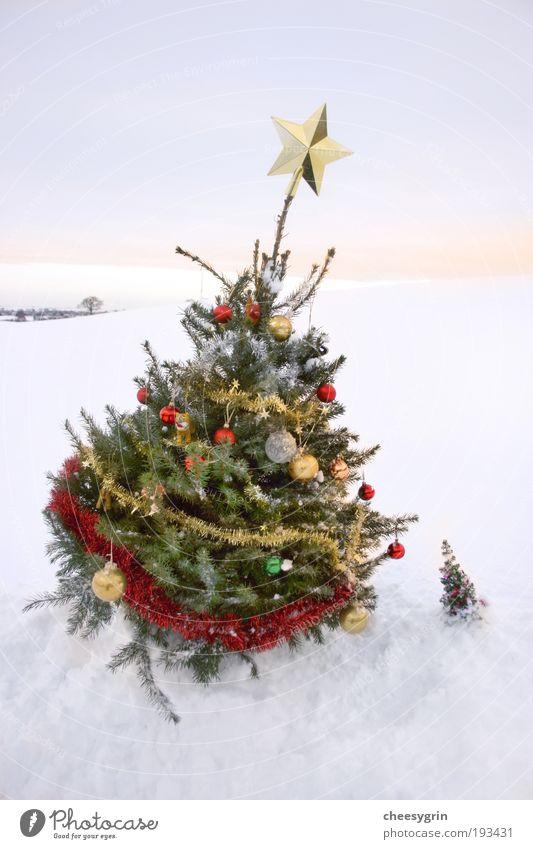 Large Christmas tree and Small Christmas tree Sky Christmas & Advent White Tree Joy Winter Snow Friendship Decoration Large Corner Stars Winter vacation Tinsel Sunrise