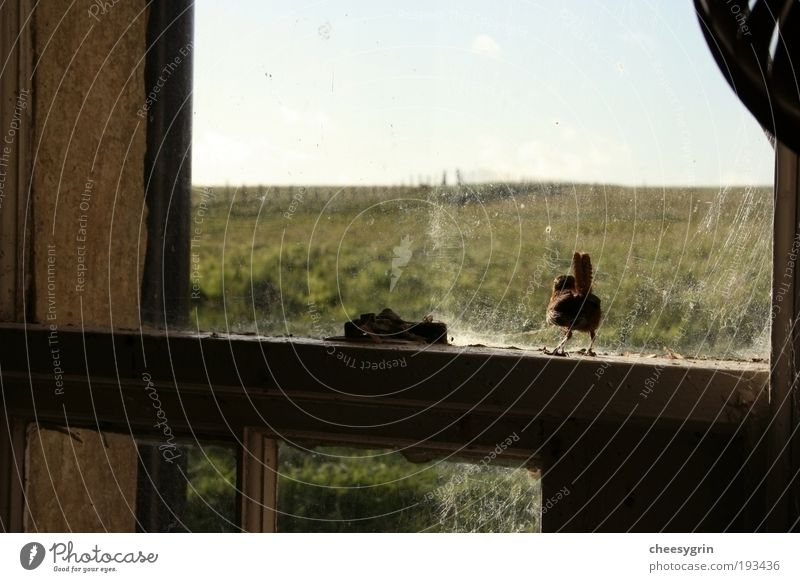 Bird at the window Nature Old Green Loneliness Animal Grass Freedom Wood Field Glass Poverty Environment Closed