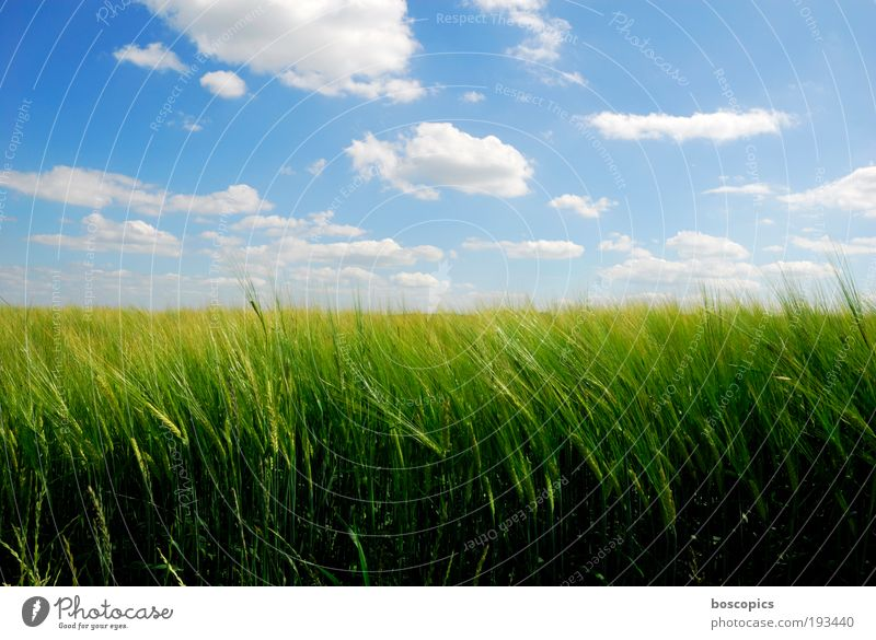 Sky Green Blue Summer Clouds Yellow Landscape Field Esthetic Cornfield Friendliness Beautiful weather Agriculture Light Nature Economy
