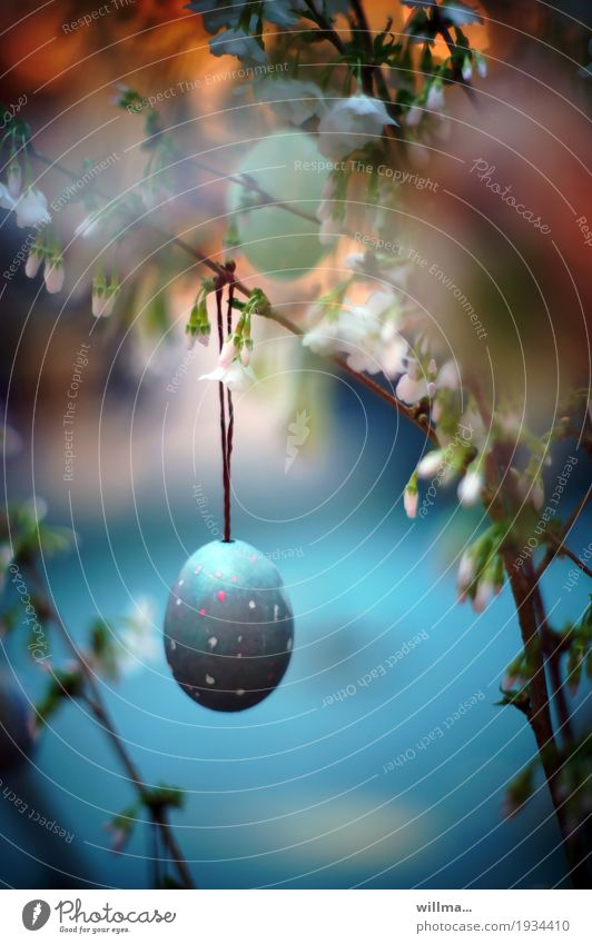Painted Easter egg hangs on flowering twig Spring Cherry blossom Uniqueness Faded Spring celebration Fragile