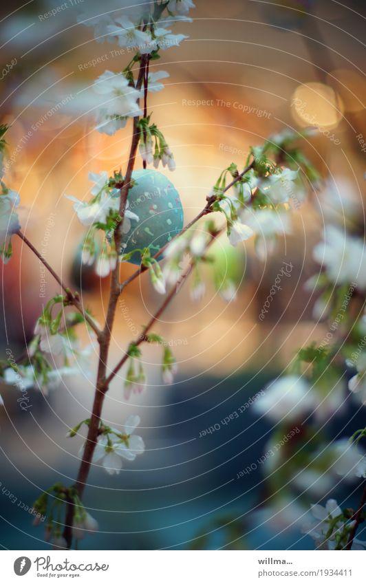 Blue Spring Easter Bud Hide Limp Painted Fragile Easter egg Cherry blossom Spring celebration
