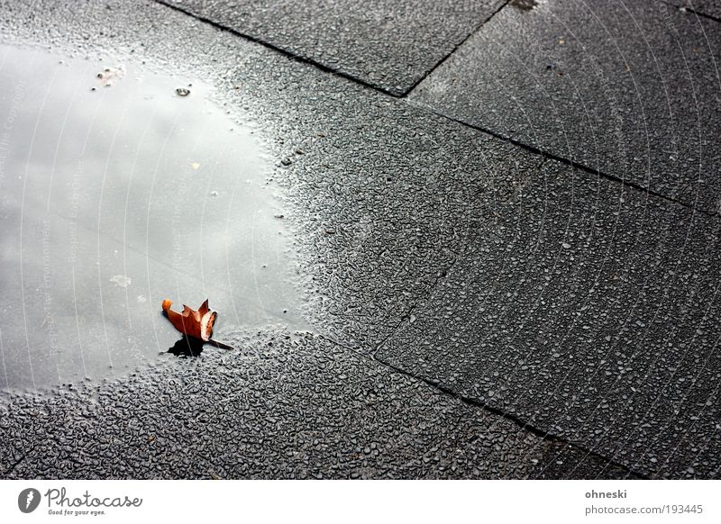 Water Leaf Clouds Loneliness Street Dark Autumn Rain Environment Grief Climate Transience Longing Fatigue Sidewalk Lose