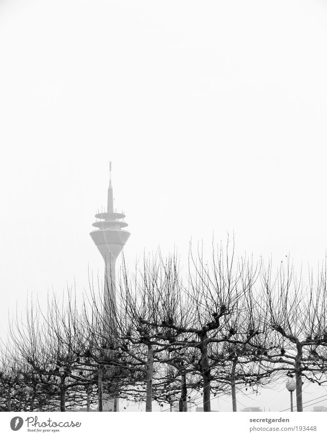 White Tree Plant Winter Loneliness Environment Wood Fog Large Esthetic Growth Tower Might Uniqueness Branch