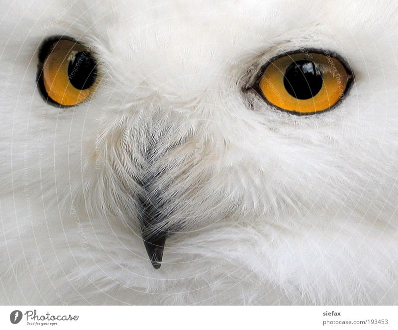 White Eyes Bird Wild Safety Threat Communicate Animal face Curiosity Observe Mysterious Brave Watchfulness Testing & Control Interest Select
