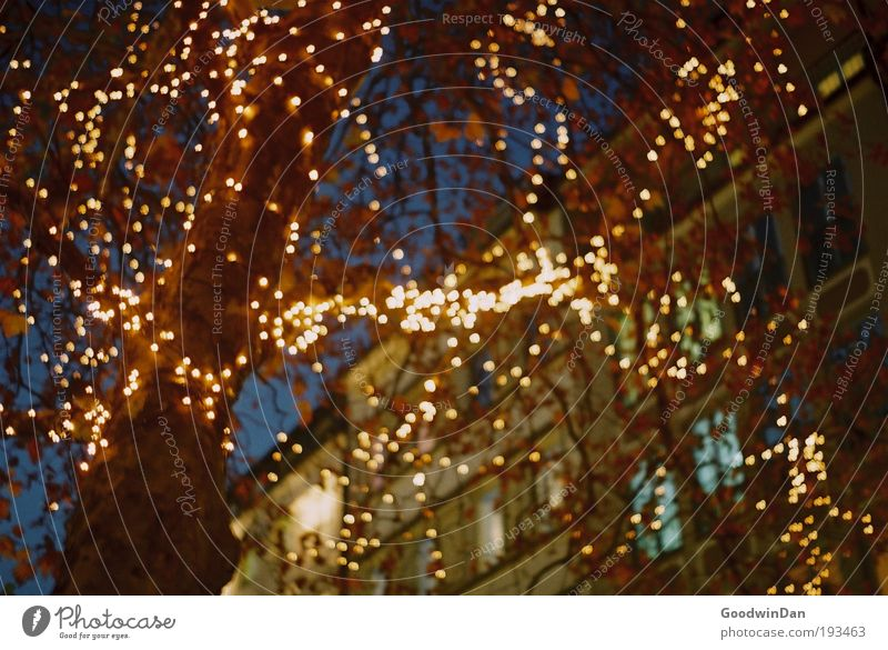Analogue Christmas lights Tree Pedestrian precinct House (Residential Structure) Fairy lights Hang Illuminate Kitsch Beautiful Warmth Happy Colour photo