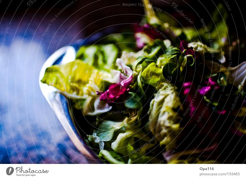 Green Nutrition Food Healthy Fresh Violet Healthy Eating Vegetable Ease Diet Bowl Lettuce Salad Section of image Partially visible Vegetarian diet