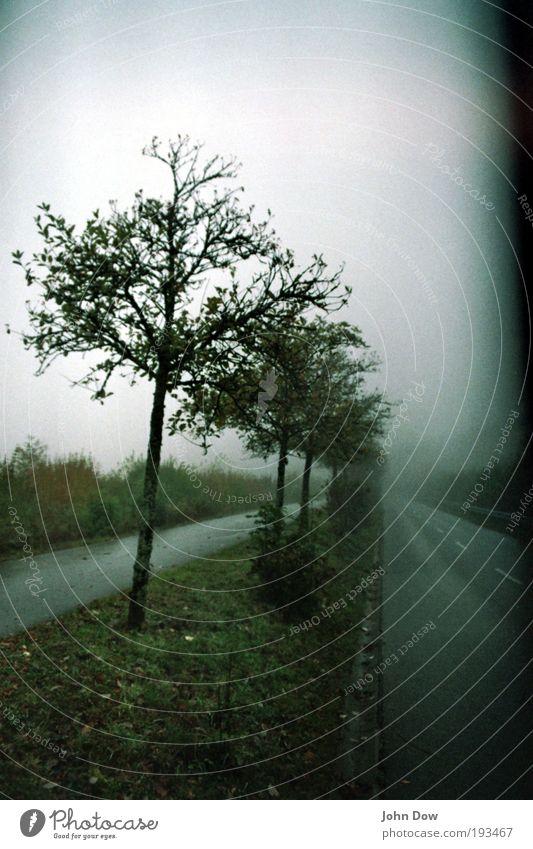 Sleepy Hollow Fog Tree Grass Bushes Traffic infrastructure Fantastic Creepy Wet Gloomy Transience Mystic Sadness Lanes & trails Shroud of fog Misty atmosphere