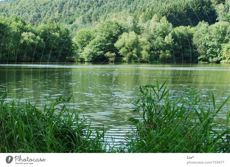 Nature Water Green Plant Summer Calm Forest Relaxation Environment Landscape Grass Lake Contentment Power Free Climate