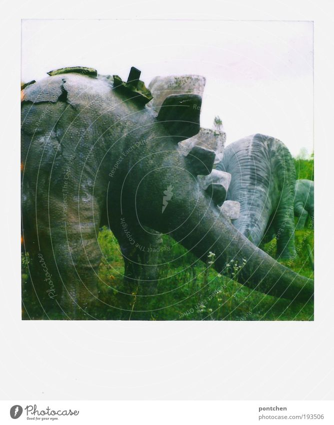 Polaroid shows the backs of dinosaur figures in a closed amusement park. Broke Leisure and hobbies Amusement Park Sky flowers Grass Meadow Animal Wild animal