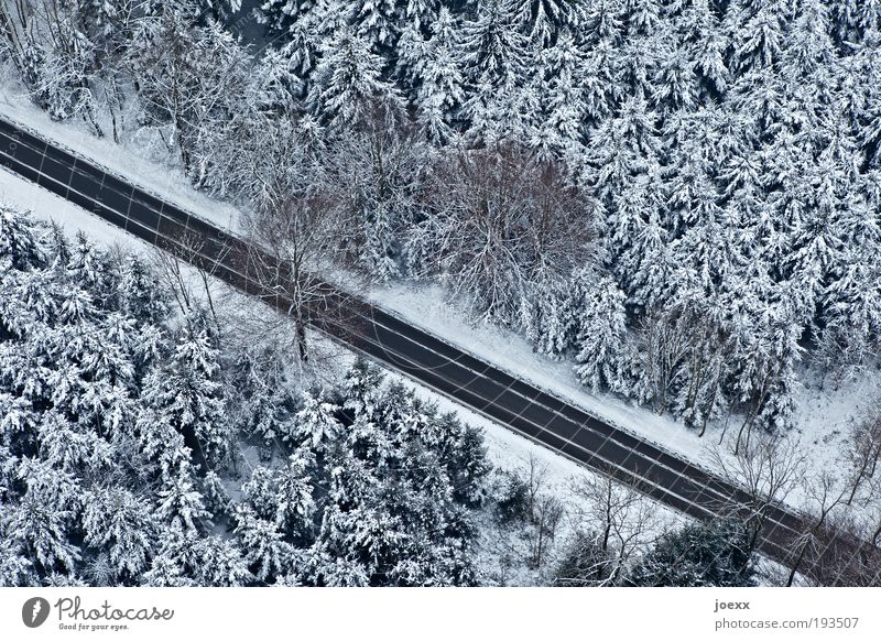 room divider Nature Winter Ice Frost Snow Tree Forest Traffic infrastructure Street Discover Above Under Calm Fear Bird's-eye view Coniferous forest Snowscape
