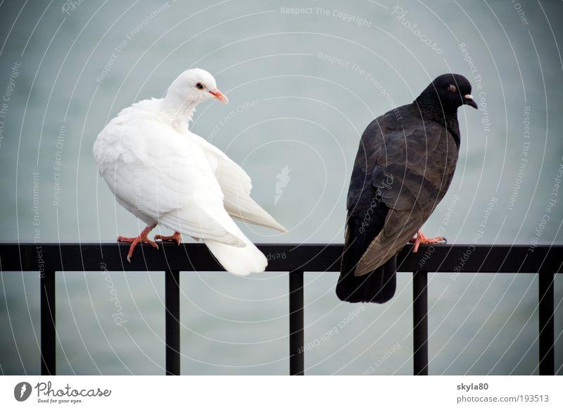 marital quarrel Animal Converse Yin & Yang Lake Handrail Argument Love rapprochement admire fall in love Jealousy Emotions Relationship Opposites Infatuation
