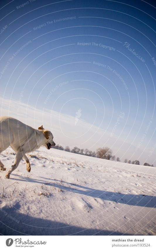 Nature Beautiful Sky Tree Plant Winter Clouds Animal Cold Snow Meadow Jump Movement Dog Landscape Ice