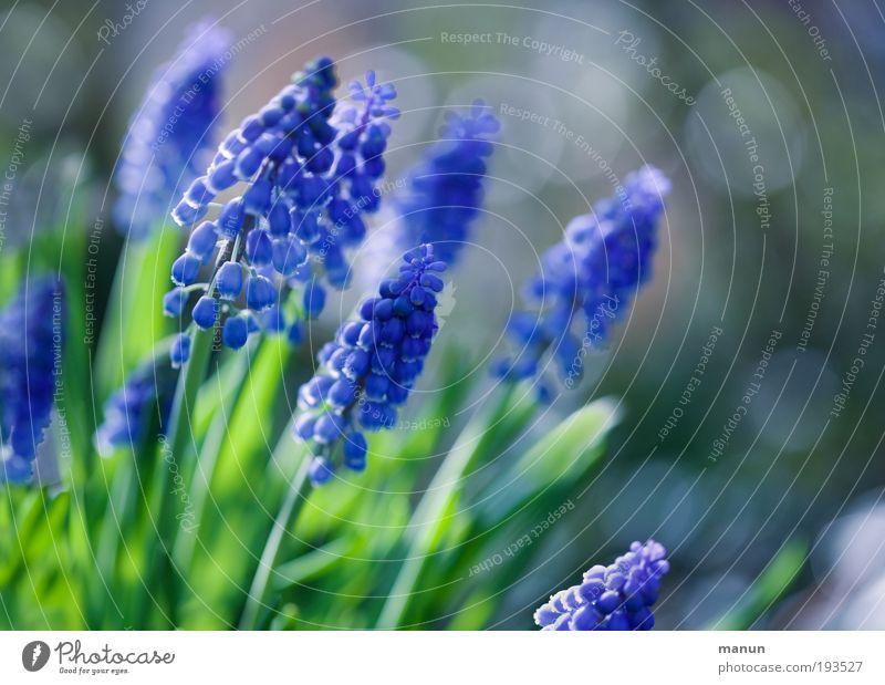 Nature Blue Calm Spring Garden Bright Park Illuminate Fresh Happiness Joie de vivre (Vitality) Blossoming Friendliness Well-being Fragrance Ease