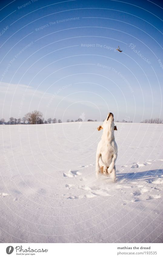 Nature White Tree Dog Plant Winter Flower Animal Cold Meadow Snow Environment Landscape Playing Jump Ice