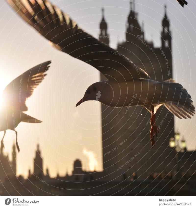 Exhilarated Elegant Far-off places Freedom Sun Sunrise Sunset Sunlight Beautiful weather London Town Skyline Animal Bird Wing 2 Flock Movement Flying Infinity
