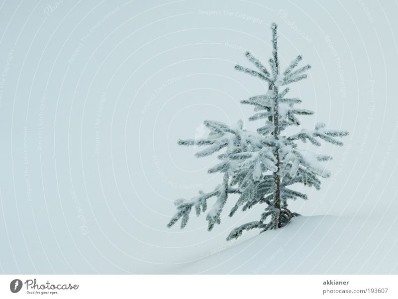 Nature Water White Tree Plant Winter Environment Landscape Cold Snow Air Bright Park Ice Climate Elements