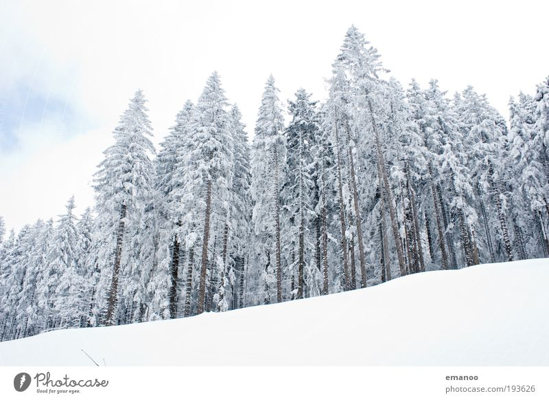 Nature White Tree Vacation & Travel Winter Loneliness Calm Relaxation Landscape Cold Snow Mountain Ice Trip Idyll Alps