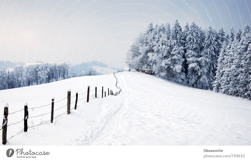 Winter wonderland Nature Landscape Plant Sky Clouds Ice Frost Snow Tree Meadow Forest Hill Moody Earth Fence Lanes & trails Winter vacation Colour photo