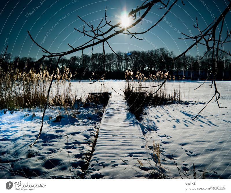 Nature Plant Tree Landscape Calm Far-off places Winter Forest Environment Snow Wood Germany Lake Horizon Illuminate Ice