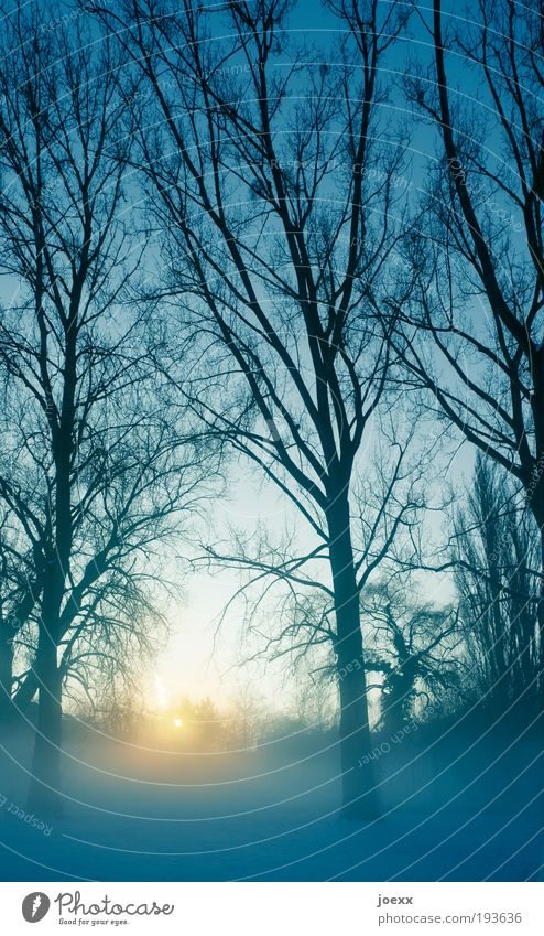 Nature Sky Tree Sun Winter Calm Cold Air Ice Large Frost Beautiful weather Haze Morning Sunset Morning fog
