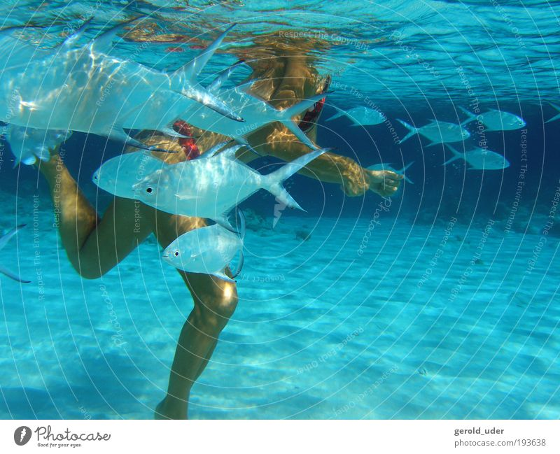 Human being Woman Water Vacation & Travel Summer Ocean Animal Adults Relaxation Feminine Playing Legs Contentment Waves Swimming & Bathing Fish