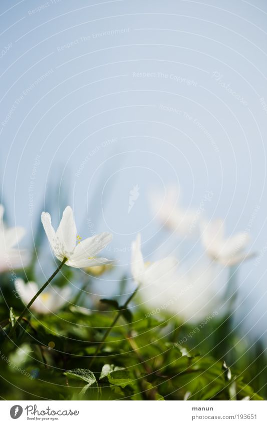 Sky Nature Blue White Relaxation Flower Calm Meadow Spring Blossom Bright Park Growth Fresh Happiness Blossoming