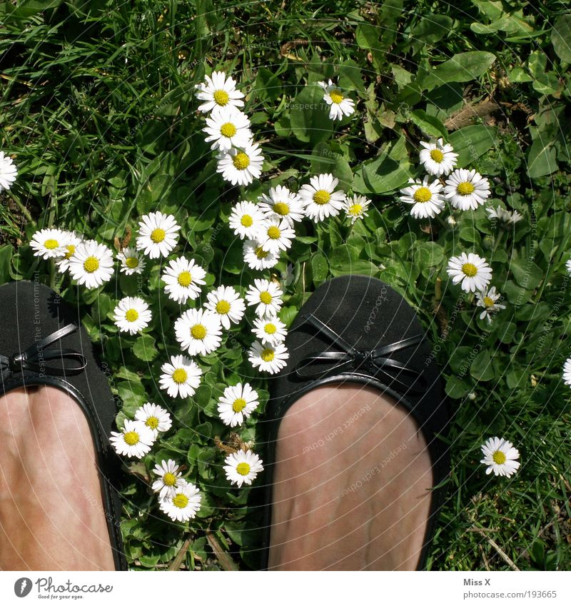 Hello Spring, Summer, Sun, Daisies and Cheese Feet Vacation & Travel Garden 1 Human being Nature Flower Grass Leaf Blossom Meadow Footwear Happiness Beautiful