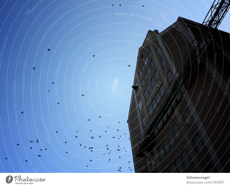 Sky Blue Cold Freedom Above Movement Happy Stone Building Air Moody Bird Facade Flying Tall Concrete