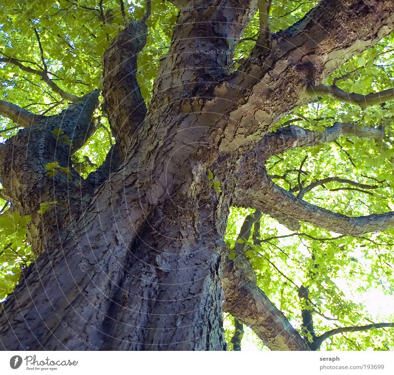 Nature Old Plant Leaf Forest Wood Growth Network Branch Tree trunk Treetop Interlaced Branchage Tree bark Partially visible Section of image