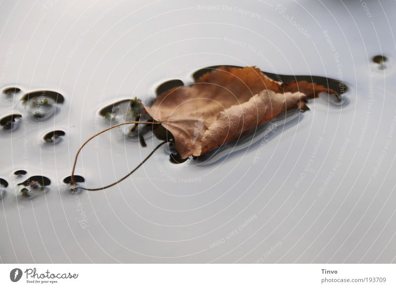Nature Water Leaf Calm Autumn Lake Lie Stalk Pond Float in the water Smoothness Puddle Autumn leaves Flat Surface of water Rachis