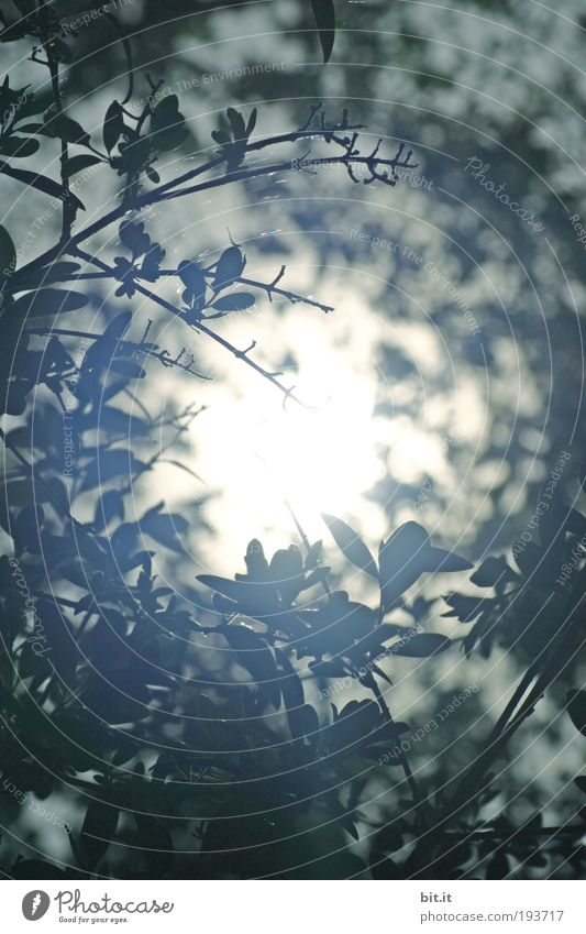 knot hole Environment Nature Plant Sun Beautiful weather Bushes Leaf Foliage plant Hot Bright Above Round Blue White Belief Middle Hollow Illuminate Branch