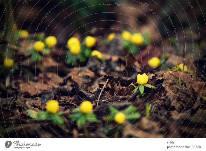 Nature Flower Plant Leaf Animal Yellow Blossom Spring Landscape Brown Environment Blossoming