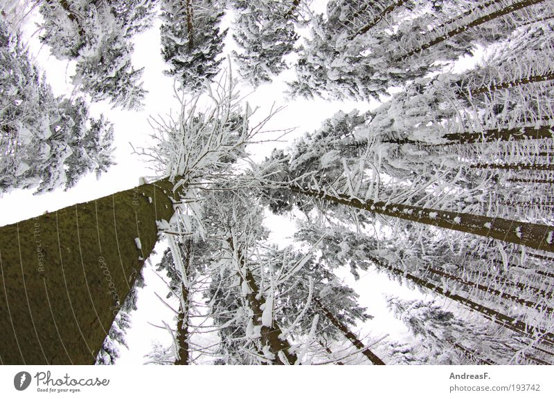 Nature Sky White Tree Plant Winter Forest Cold Snow Gray Landscape Ice Environment Frost Treetop Light