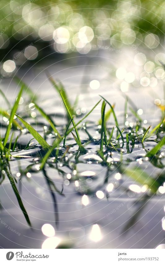 Nature Water Green Plant Calm Meadow Grass Contentment Glittering Environment Wet Fresh Climate Pure Natural Idyll